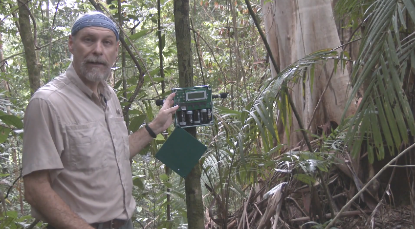 soundscapes in rainforest